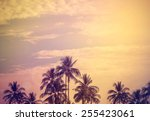 vintage style filtered nature...   Shutterstock . vector #255423061