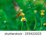 butterfly hang flower