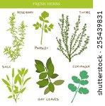 fresh herbs | Shutterstock .eps vector #255439831