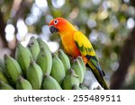 A Colorful Parrot On A Stand I...