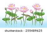 pink lotus flower with...