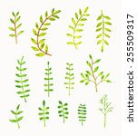 watercolor  leaf vintage style  ...   Shutterstock .eps vector #255509317
