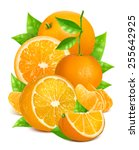 fresh ripe oranges and... | Shutterstock .eps vector #255642925