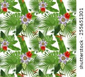 tropical seamless pattern on...   Shutterstock .eps vector #255651301