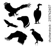 vulture set of silhouettes... | Shutterstock .eps vector #255762607