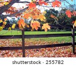 This is a backlit photo of some fall leaves with a fence in the background. - stock photo
