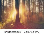 beautiful sunset  retro film... | Shutterstock . vector #255785497