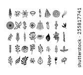 flowers and leaves set. black... | Shutterstock .eps vector #255817741