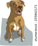 dog illustration   smiling... | Shutterstock .eps vector #255862171