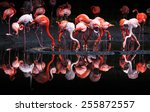 Flamingos Or Flamingoes Are A...