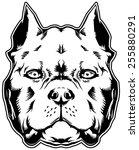 dog pit bull. american bully. | Shutterstock . vector #255880291