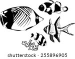 marine fishes  | Shutterstock .eps vector #255896905