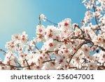 Spring Flowers.  Spring Flowers
