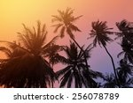 tropical beach background with...   Shutterstock . vector #256078789