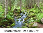 Fast Forest River Flowing Amon...