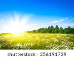 sunset sun and field of green... | Shutterstock . vector #256191739