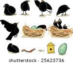 Baby Black Birds  Momma  Nest...