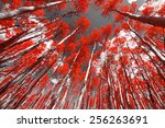 Forest Of Red Trees On A Black...