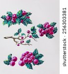 watercolor set with red berries | Shutterstock . vector #256303381