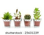 succulents or fat plants and... | Shutterstock . vector #25631239
