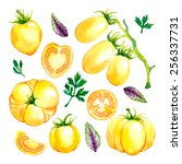 watercolor vector vegetables... | Shutterstock .eps vector #256337731