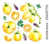 watercolor vector vegetables... | Shutterstock .eps vector #256337731