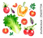 watercolor vector vegetables... | Shutterstock .eps vector #256337734
