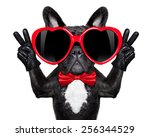 french bulldog dog happy and in ... | Shutterstock . vector #256344529