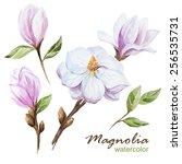Watercolor  Magnolia  Flower ...