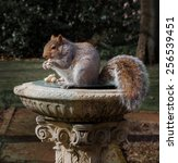 Eastern Gray Squirrel The...