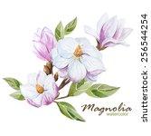 Watercolor  Magnolia  Flower