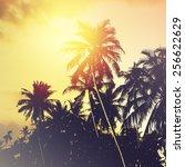 Постер, плакат: Coconut palm trees at