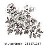 hand drawn garden flowers... | Shutterstock . vector #256671367