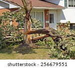 Fallen Tree After A Severe...