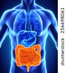 human intestine anatomy | Shutterstock . vector #256698061