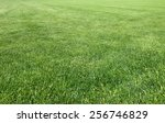 detail of the lawn of the... | Shutterstock . vector #256746829
