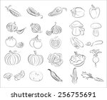 collection vector vegetables | Shutterstock .eps vector #256755691