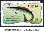 Small photo of CUBA - CIRCA 1971: A stamp printed by CUBA shows the fish PETO acanthocybium solandri (Cuvier) CUBA circa 1971