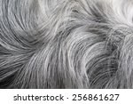 Black And White Fur Close Up