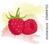 vector raspberry on watercolor... | Shutterstock .eps vector #256898701