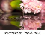 hyacinth drop of water