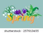 spring flowers. crocus  saffron ... | Shutterstock .eps vector #257013655