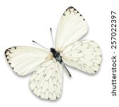 Stock photo white butterfly isolated on white background 257022397