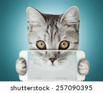 kitten holding mobile phone | Shutterstock . vector #257090395