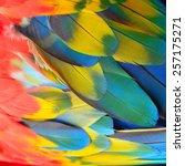 beautiful bird feathers ... | Shutterstock . vector #257175271