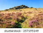 Bellever Tor In Dartmoor...