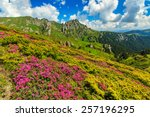 beautiful pink rhododendron... | Shutterstock . vector #257196295