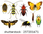 set of insects on a white... | Shutterstock . vector #257201671