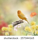 Yellow Bird Perched In The...