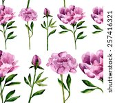 watercolor peony flowers... | Shutterstock .eps vector #257416321